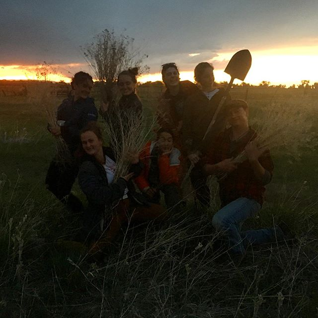 Atomic sunset student weed harvest, everyone else ( @glomlop )was doing chores