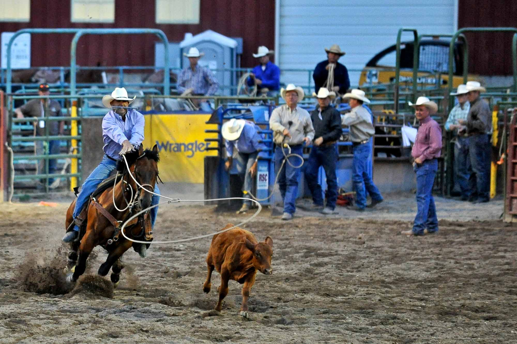 Willie Roberts lassos a calf and pins it to the ground in 12.3 seconds during the 75th annual Eagle County Fair and Rodeo in Eagle, Colo. on Thursday, July 24, 2014.