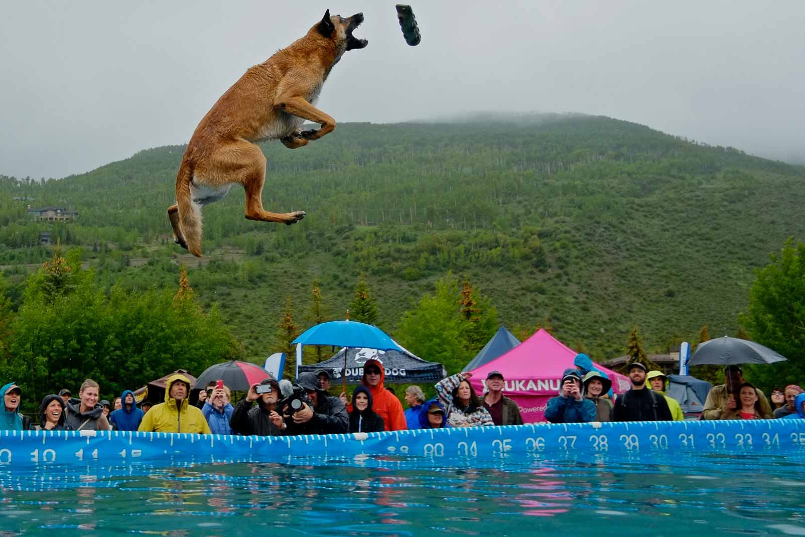 A small crowd braves the rain to watch Remy, a Belgian Malinois, catch the toy thrown by his handler Jon Langdon, of Arveda, during the GoPro Mountain Games' DockDogs Big Air final pro competition at Golden Peak on Sunday, June 8, 2014.