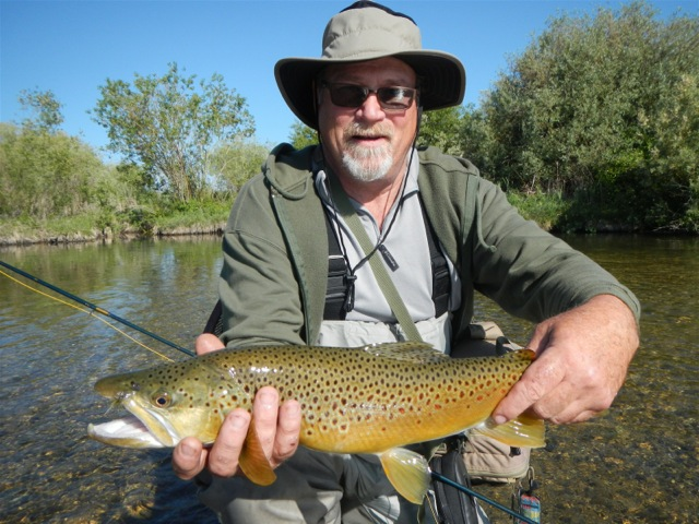 Brown trout, caught during the brown drake hatch at Silver Creek, Idaho.