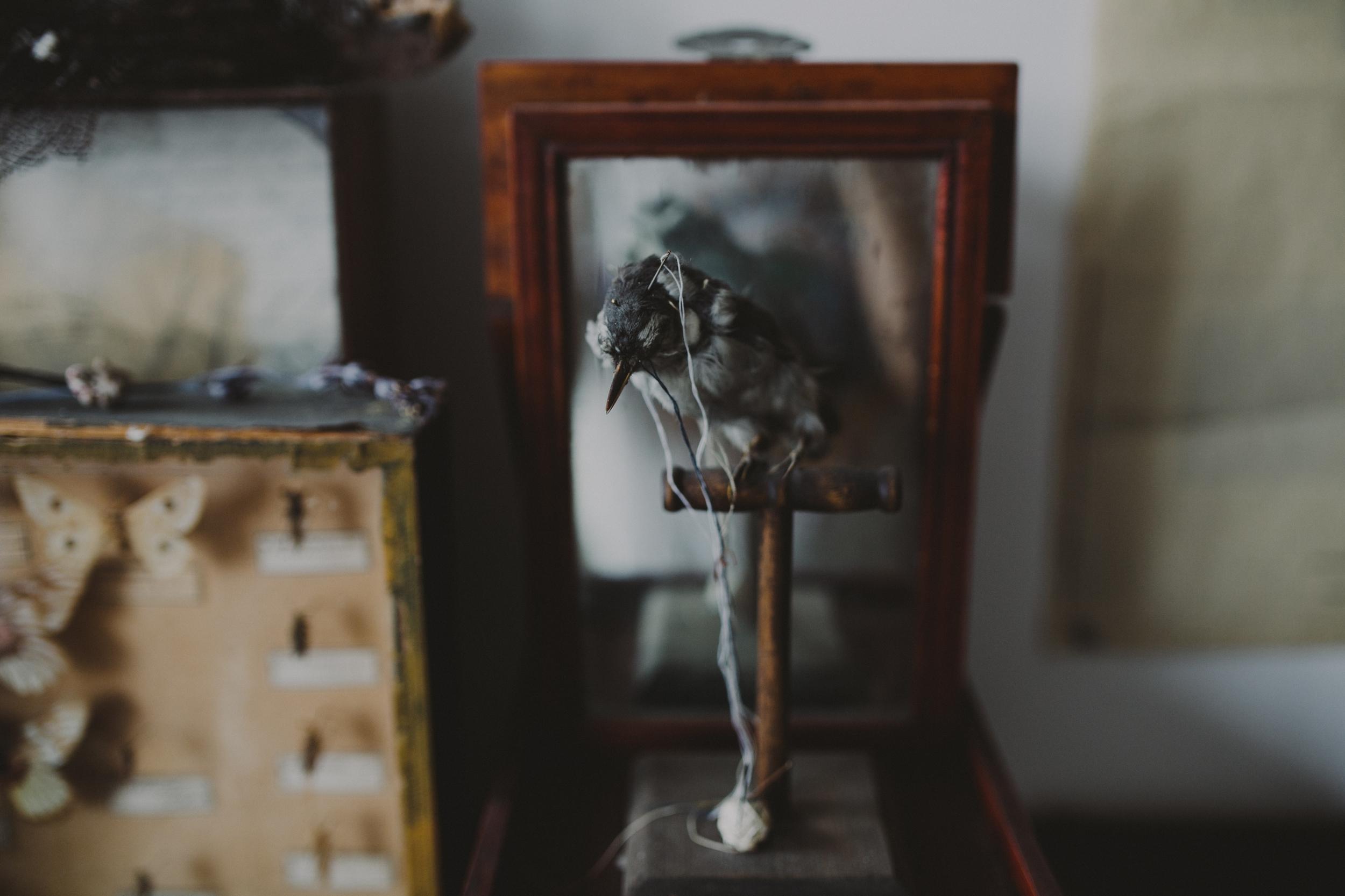 bogart portraits meet the michaels phantom limb 1960.JPG