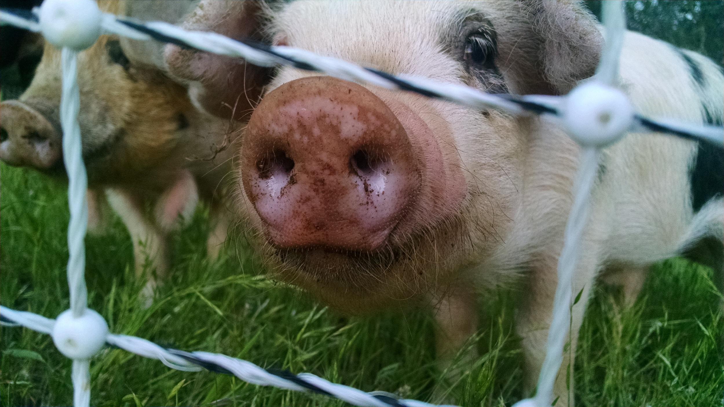 Oh hey baby Wilbur