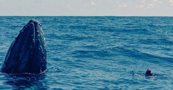 Photographing a Humpback Whale in the Dominican Republic under permit.