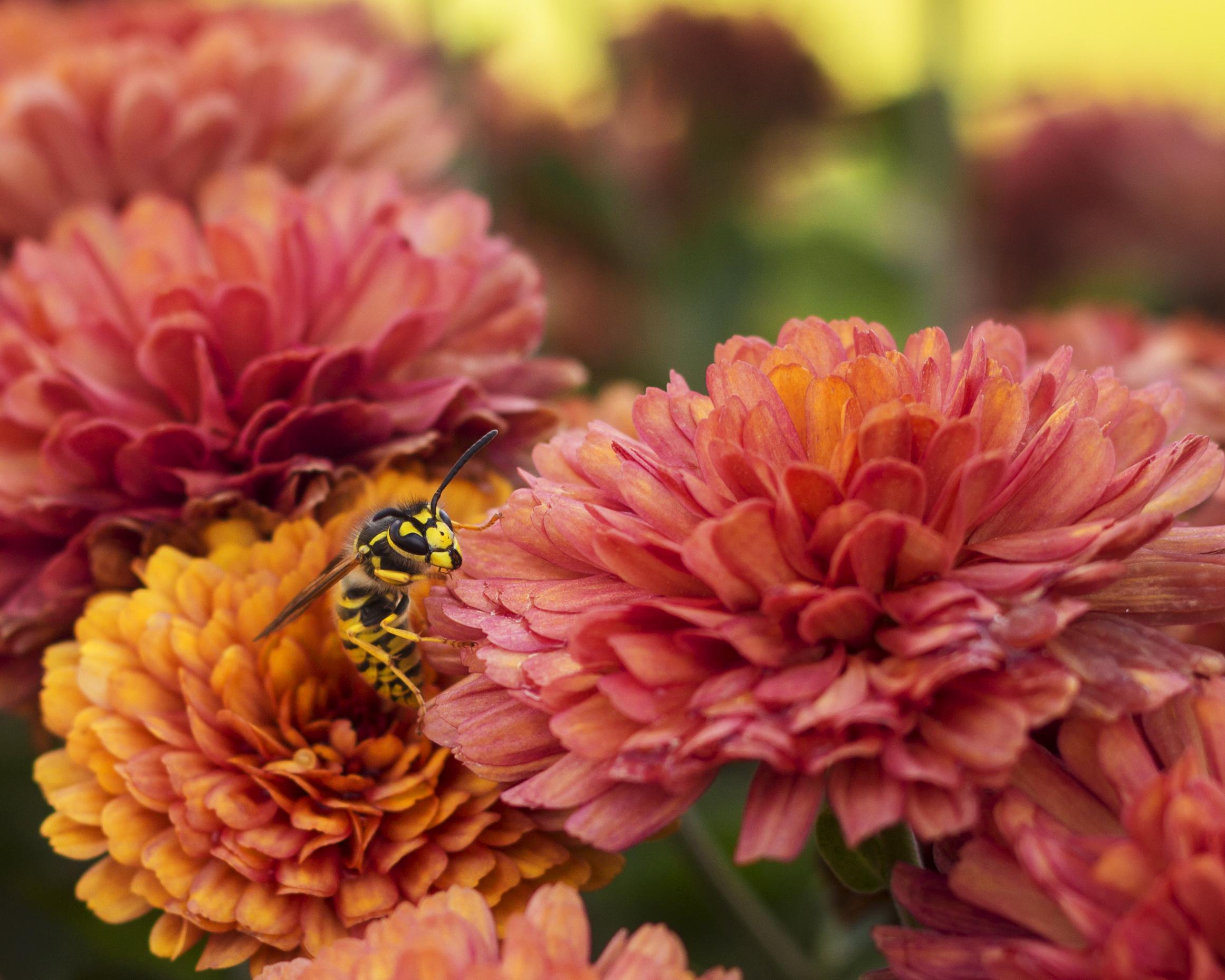 Bee Flowers a.jpg