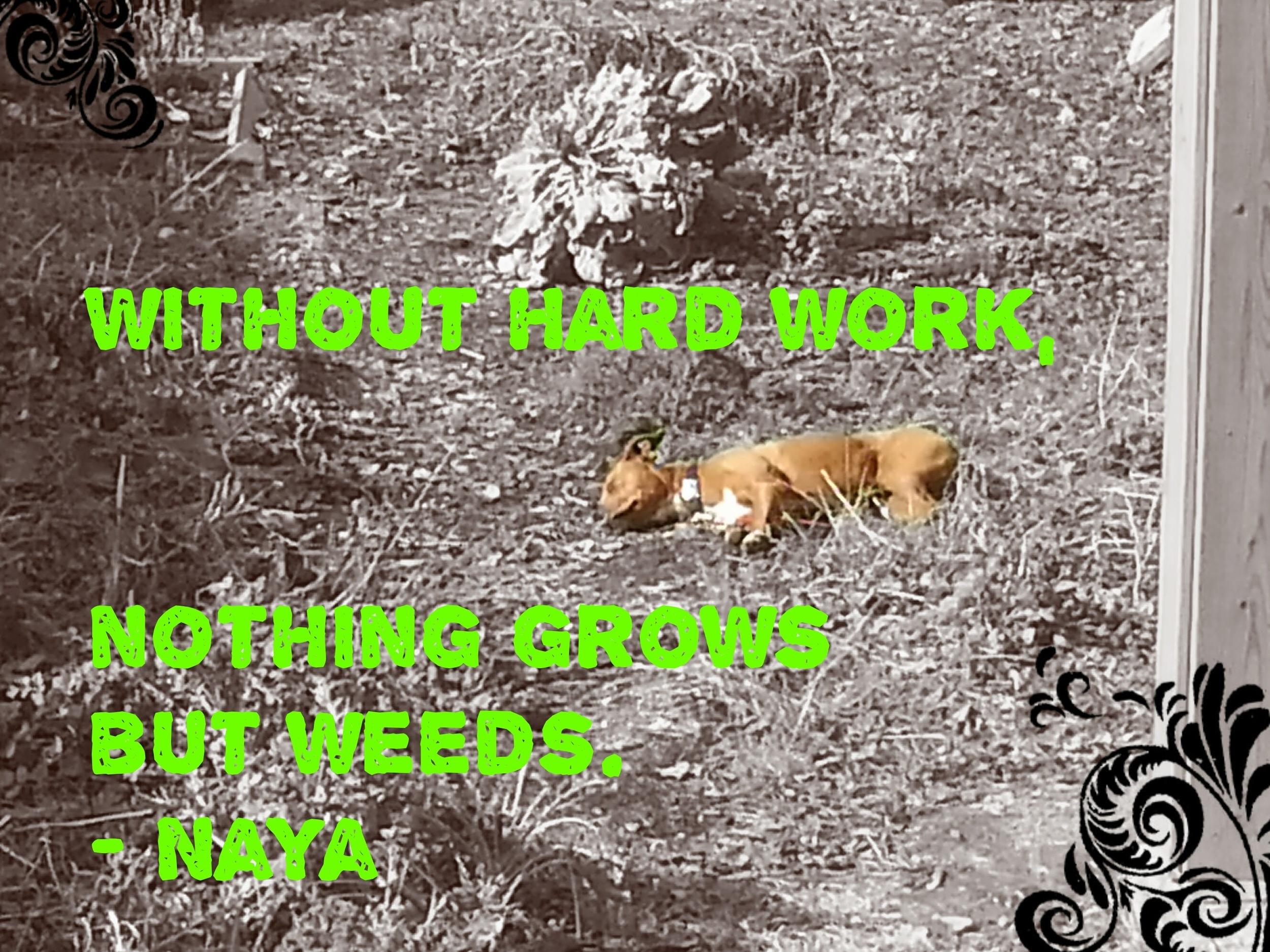 Without hard work, nothing grows but weeds.    - Naya