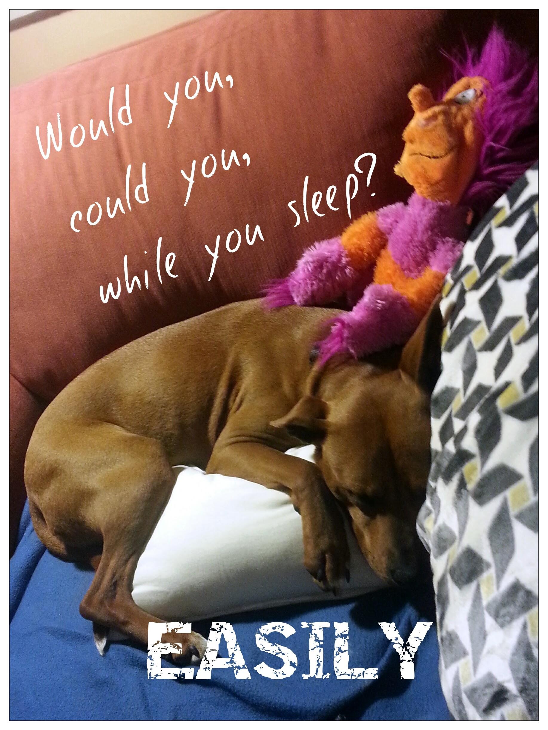 Would you, could you, while you sleep?     EASILY    - Naya
