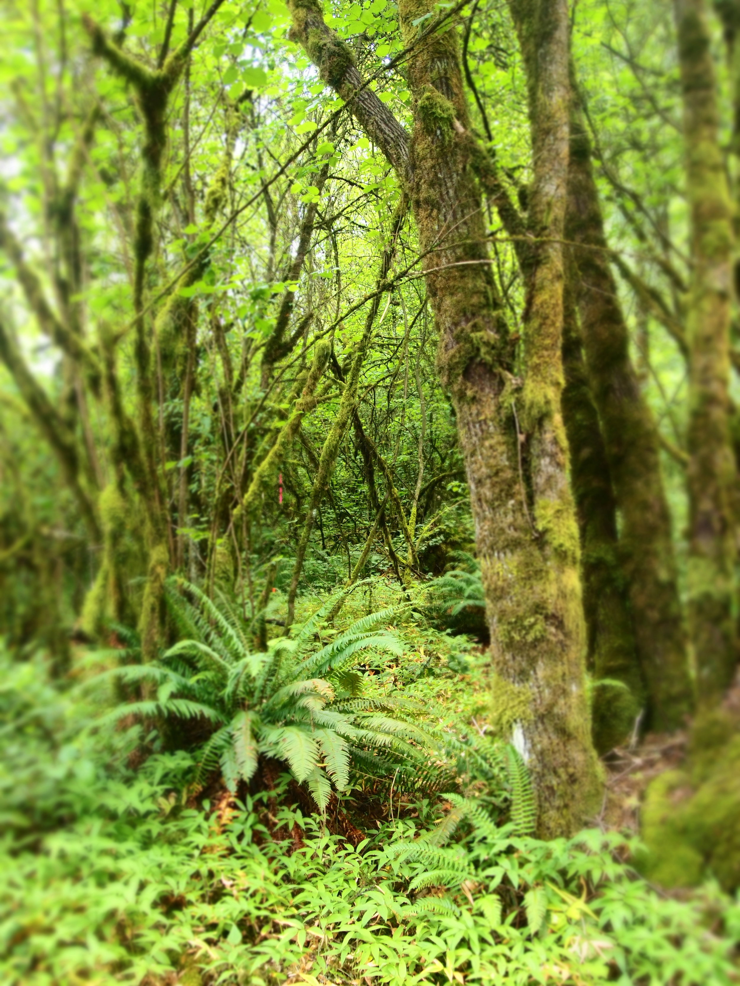 Hollister Trail1.JPG