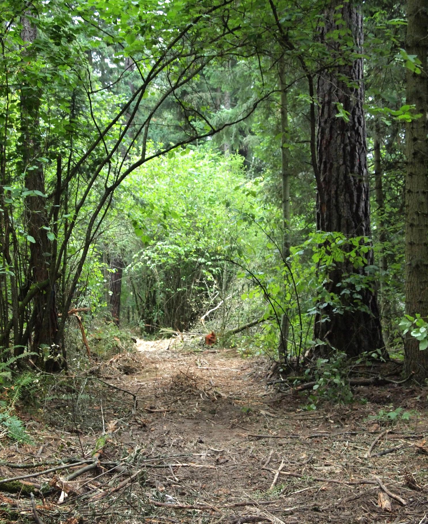 Hollister Trail9.JPG