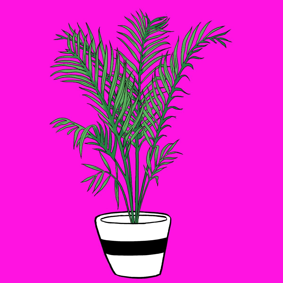 Botanical Home-Areca Palm2.jpg