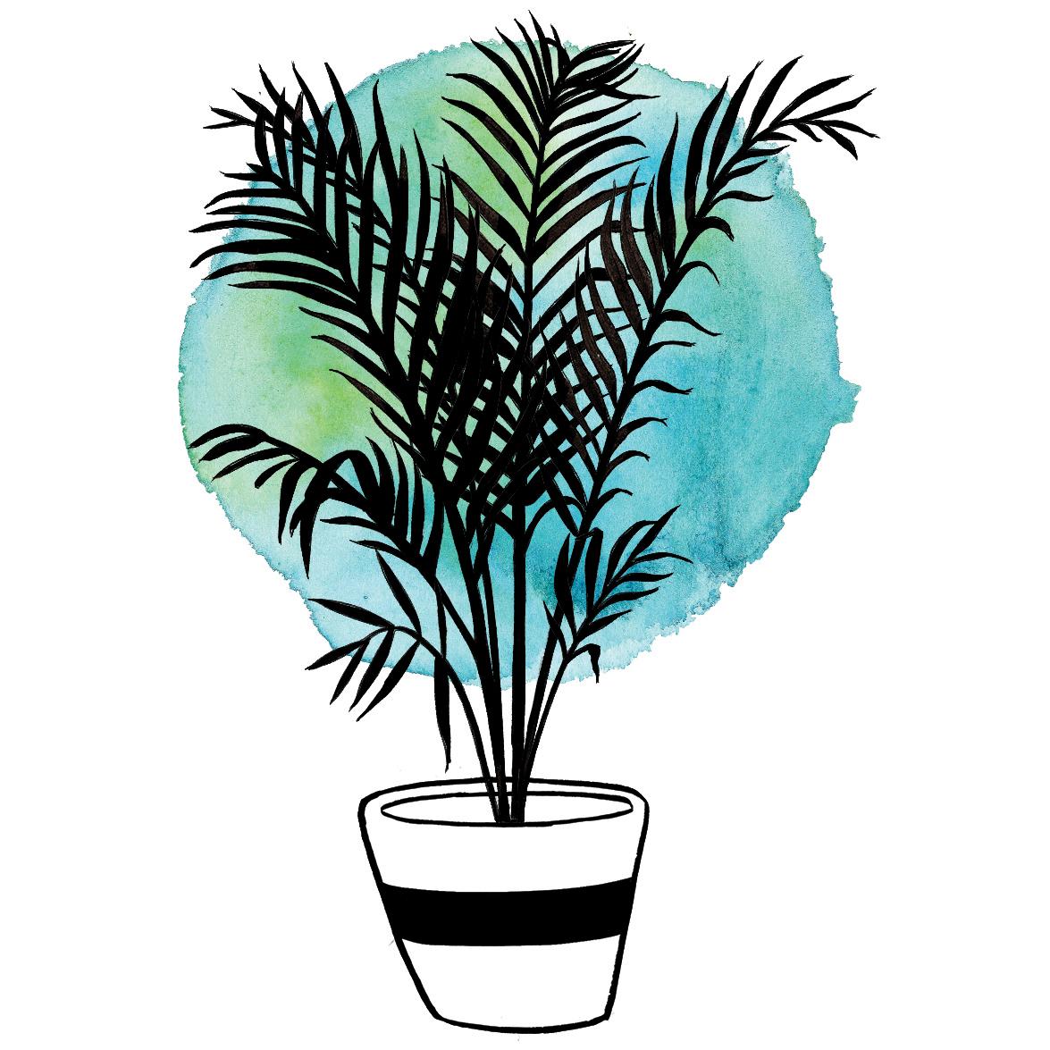 Botanical Home-Areca Palm1.jpg