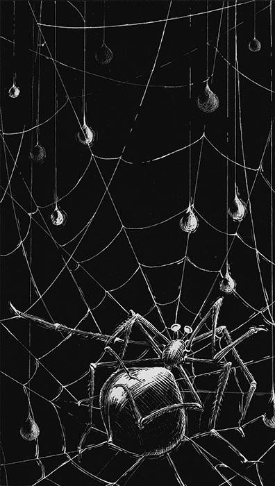 AmyLFrazer-SpiderBW.jpg