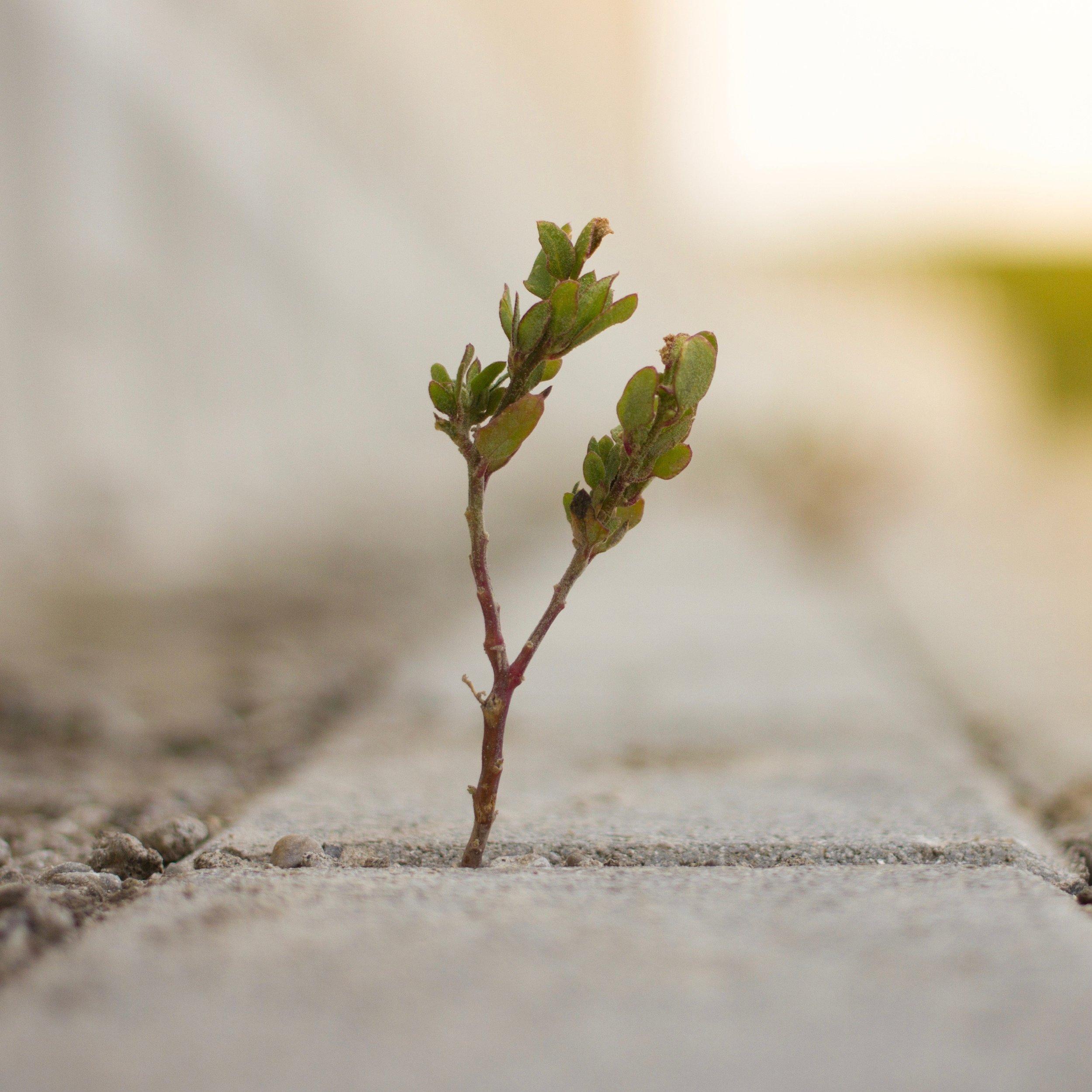 Grow - tight square crop.jpg
