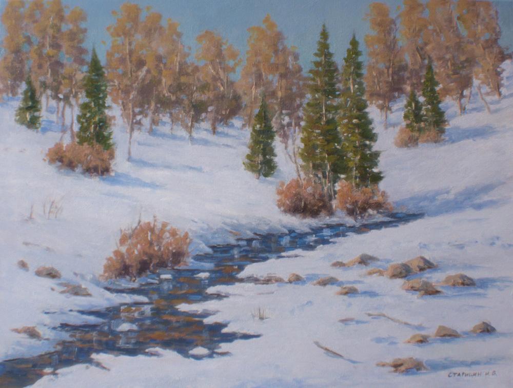 Winter Pine Trees
