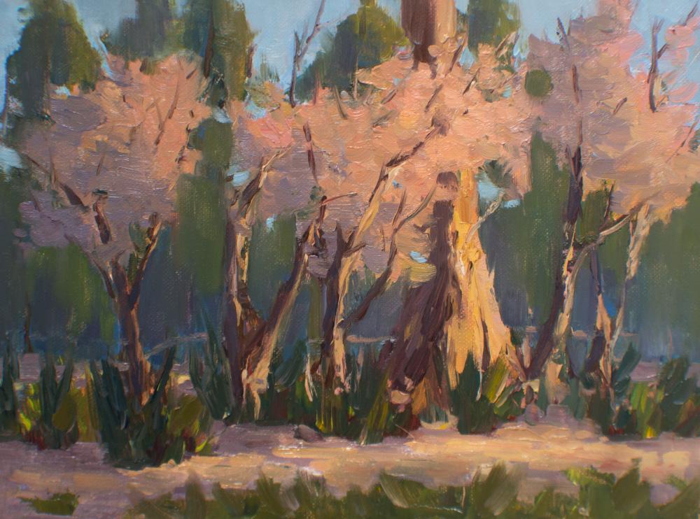 Trees in Stanley Park