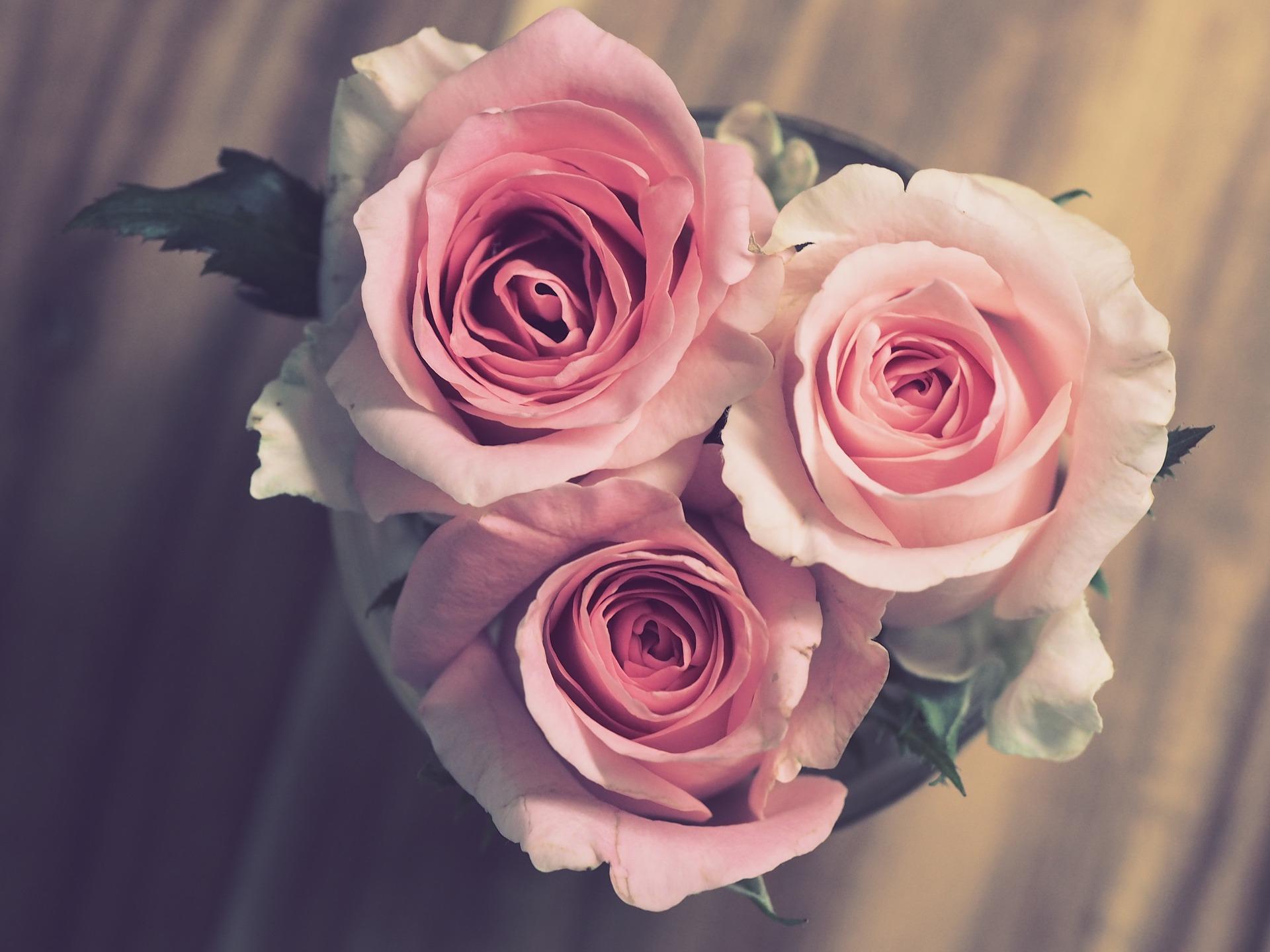 rose-3072698_1920.jpg