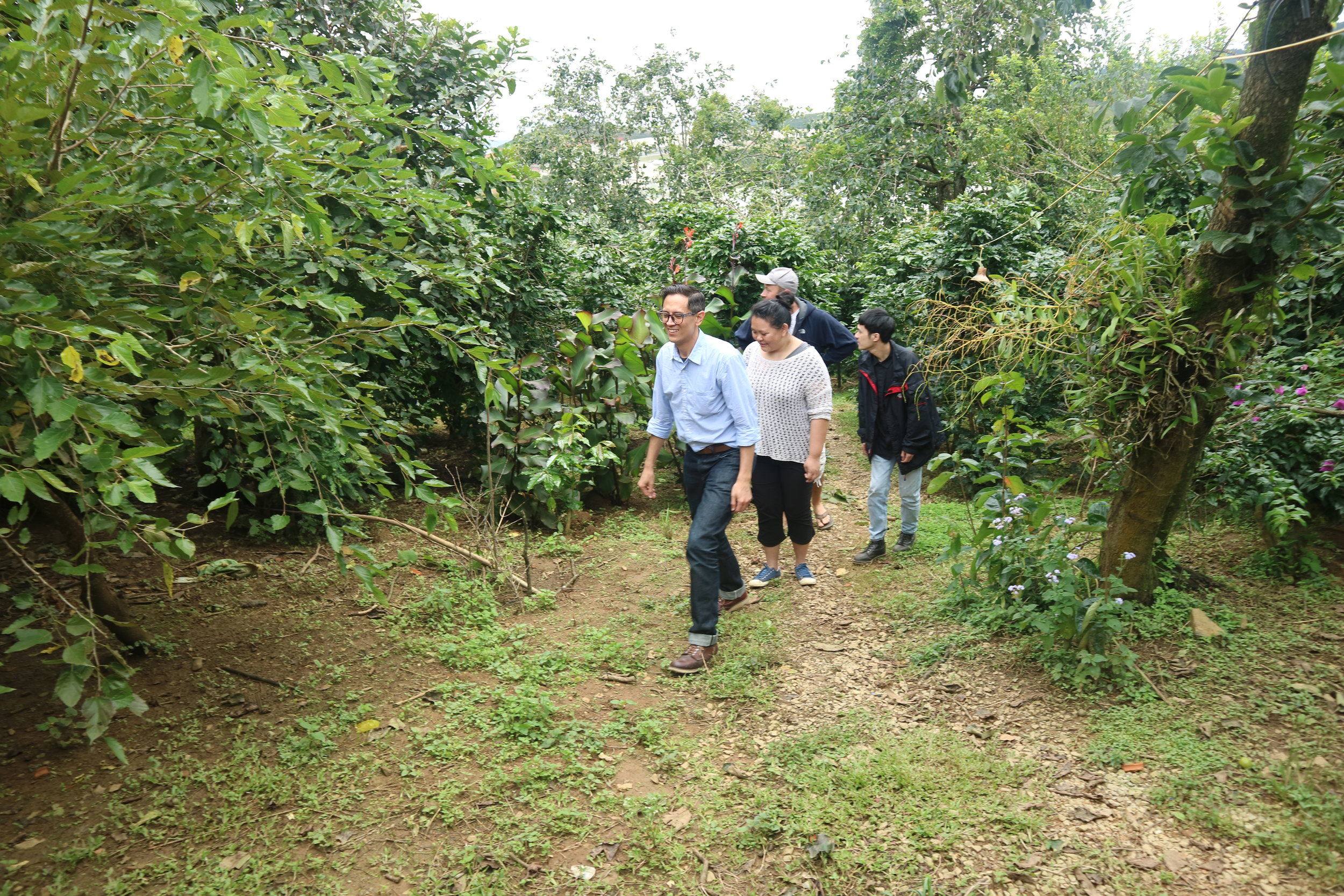 The trek from the street to the cafe takes guests through the coffee garden, which had chickens and little pigs running around (too quickly for the camera!).