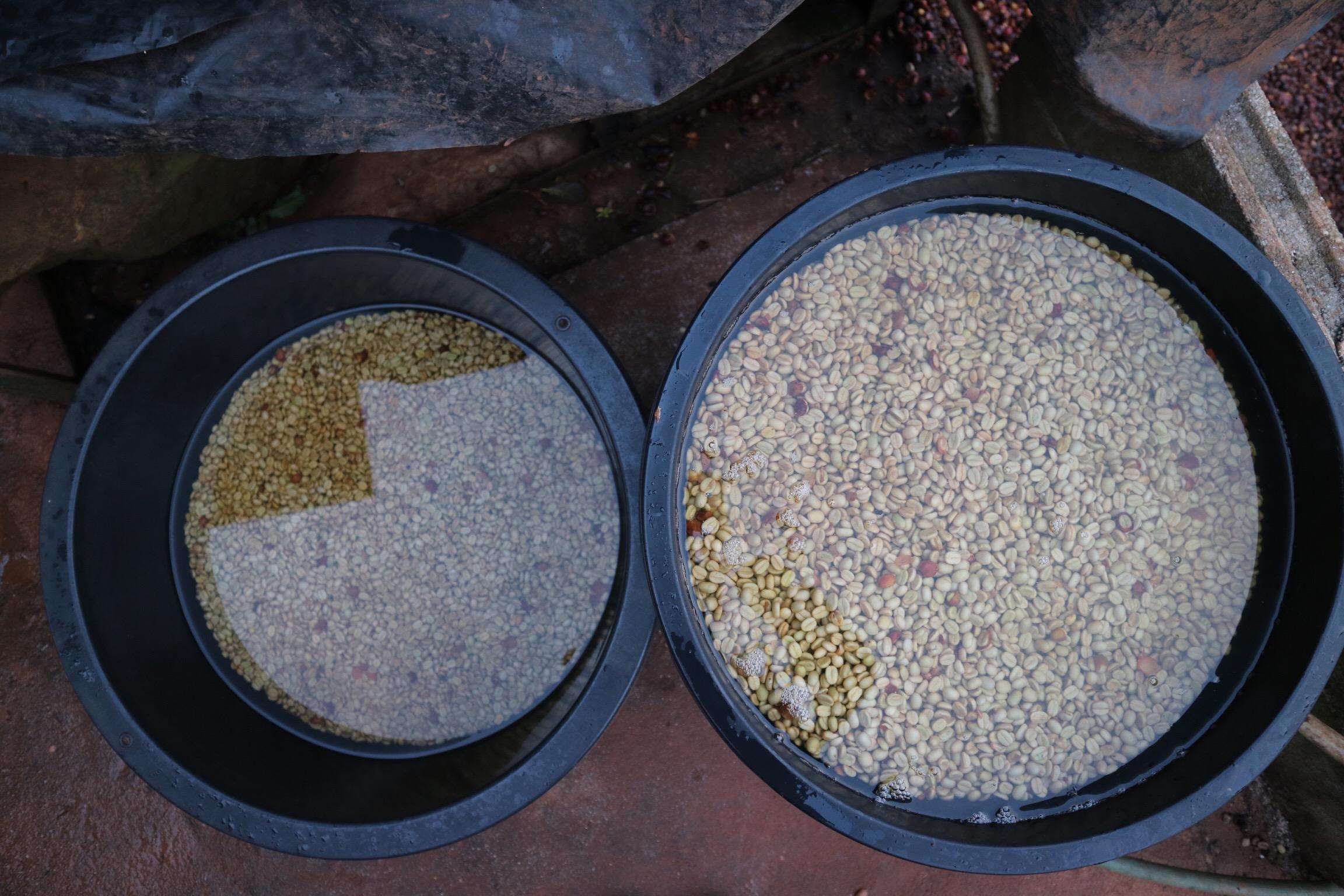 Akor's post-fermentation soak tubs help his wet parchment to find moisture balance.