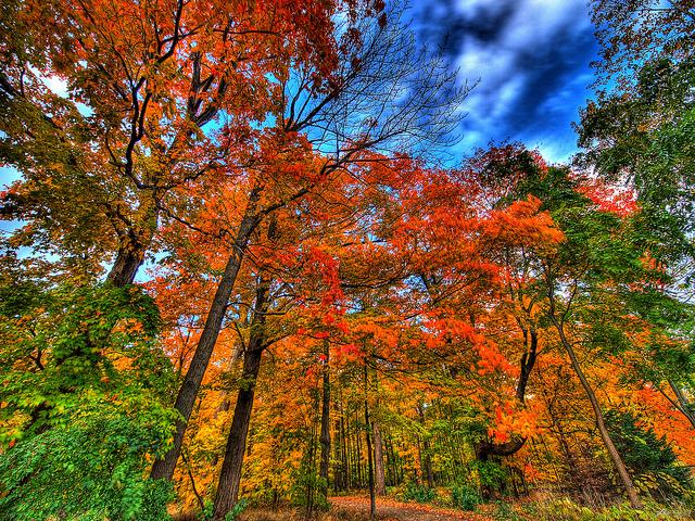 Ahhhh. Fall.  Photocredit Paul Bica.