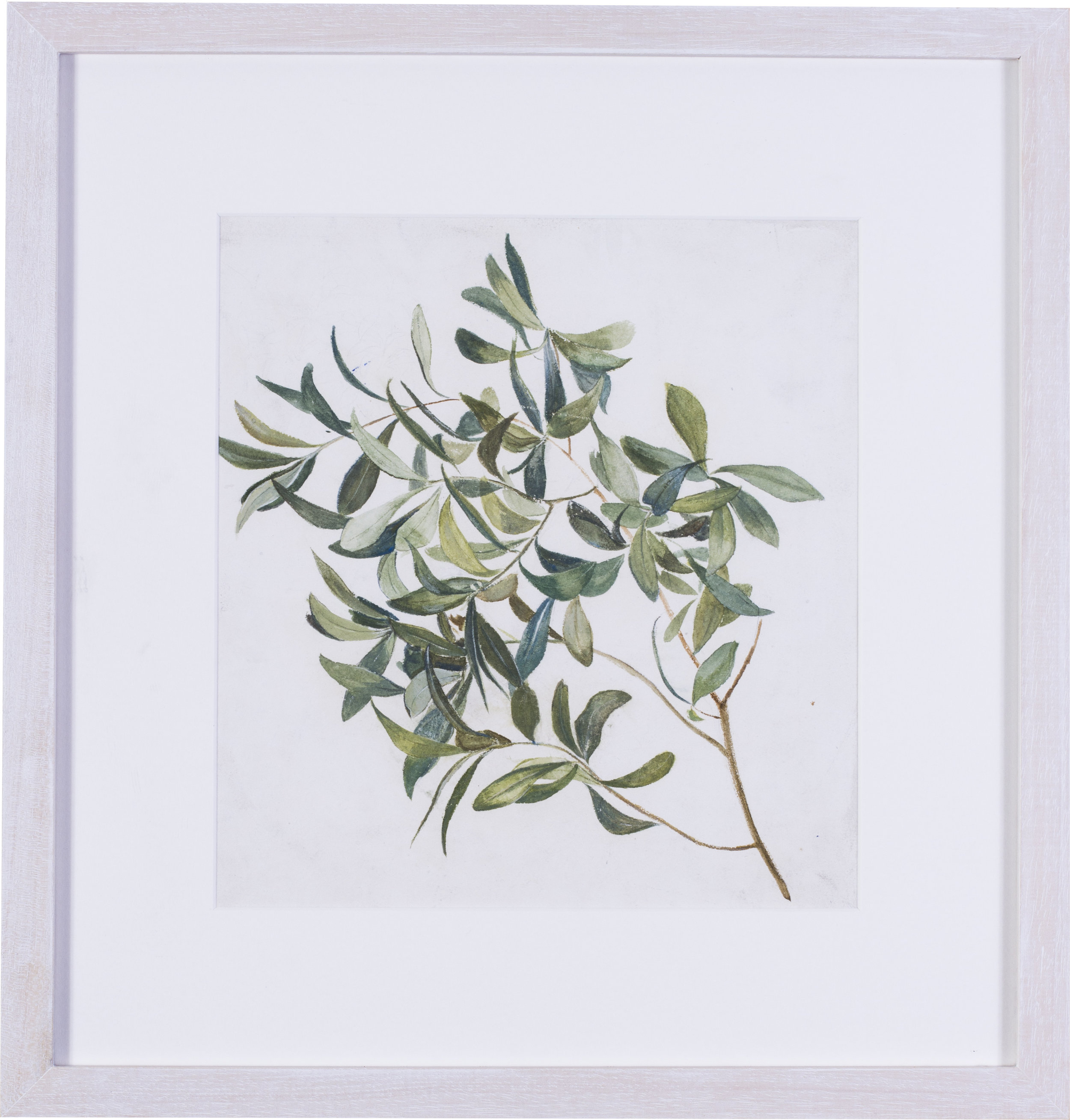 Large olive branch    watercolour on paper  11 x 10.1/4 in. (28 x 26 cm.)  Provenance: The Clayton-Stamm Collection.  Dominic Winter, Cirencester, 8thNovember 2018, lot 464  SOLD