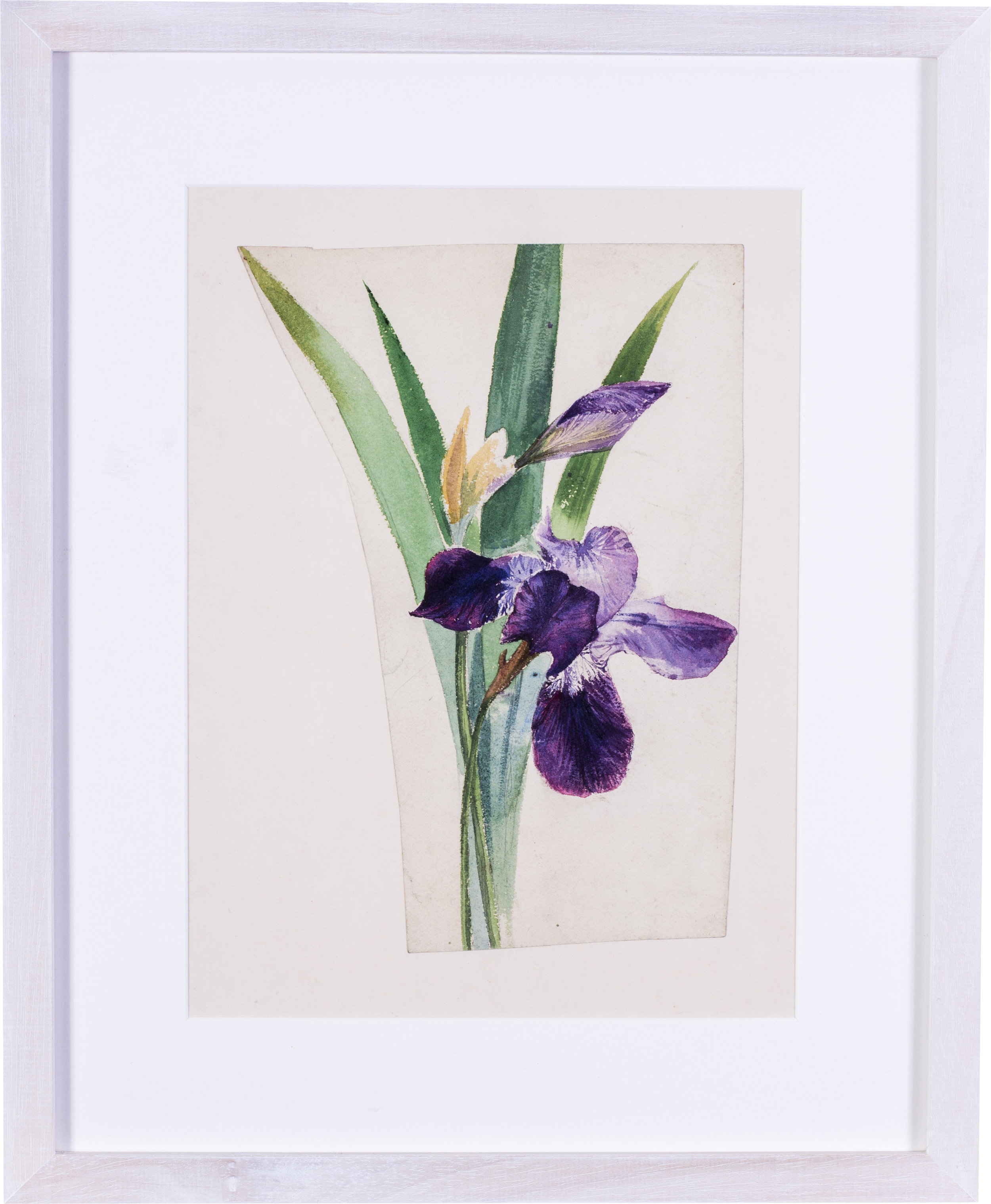 Irises    watercolour on paper stabilised on card  11 x 8 in. (28 x 20.3 cm.) (an irregular cut of paper)  Provenance: The Clayton-Stamm Collection.  Dominic Winter, Cirencester, 8thNovember 2018, lot 464  £1,100