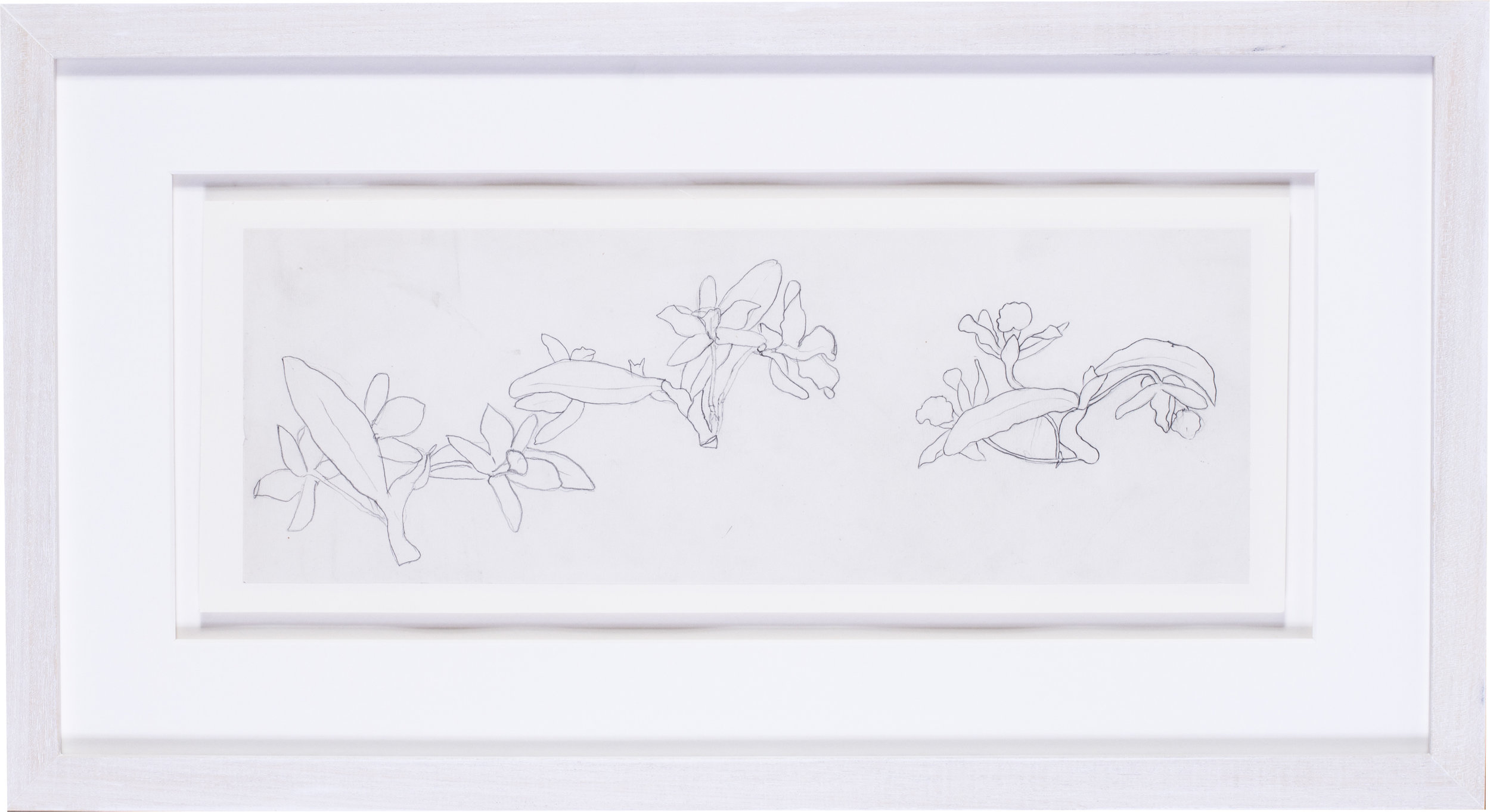 Narcissi    pencil on paper  5.1/2 x 15 in. (14 x 38 cm.)  Provenance: The Clayton-Stamm Collection.  Dominic Winter, Cirencester, 8thNovember 2018, lot 464  £1,400