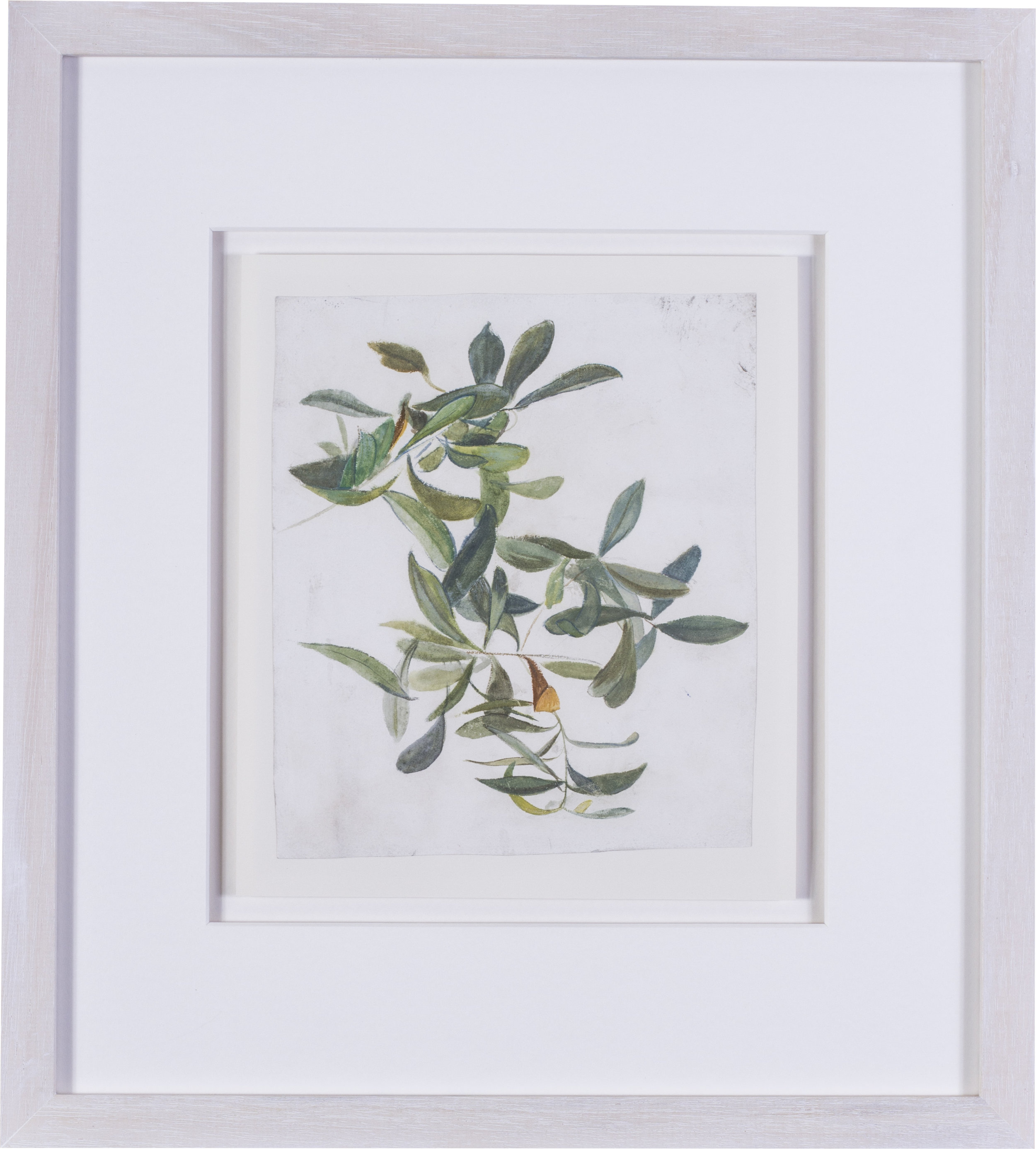 An olive branch    watercolour on paper  9 x 7.1/2 in. (22.8 x 19 cm.)  Provenance: The Clayton-Stamm Collection.  Dominic Winter, Cirencester, 8thNovember 2018, lot 464  £1,900