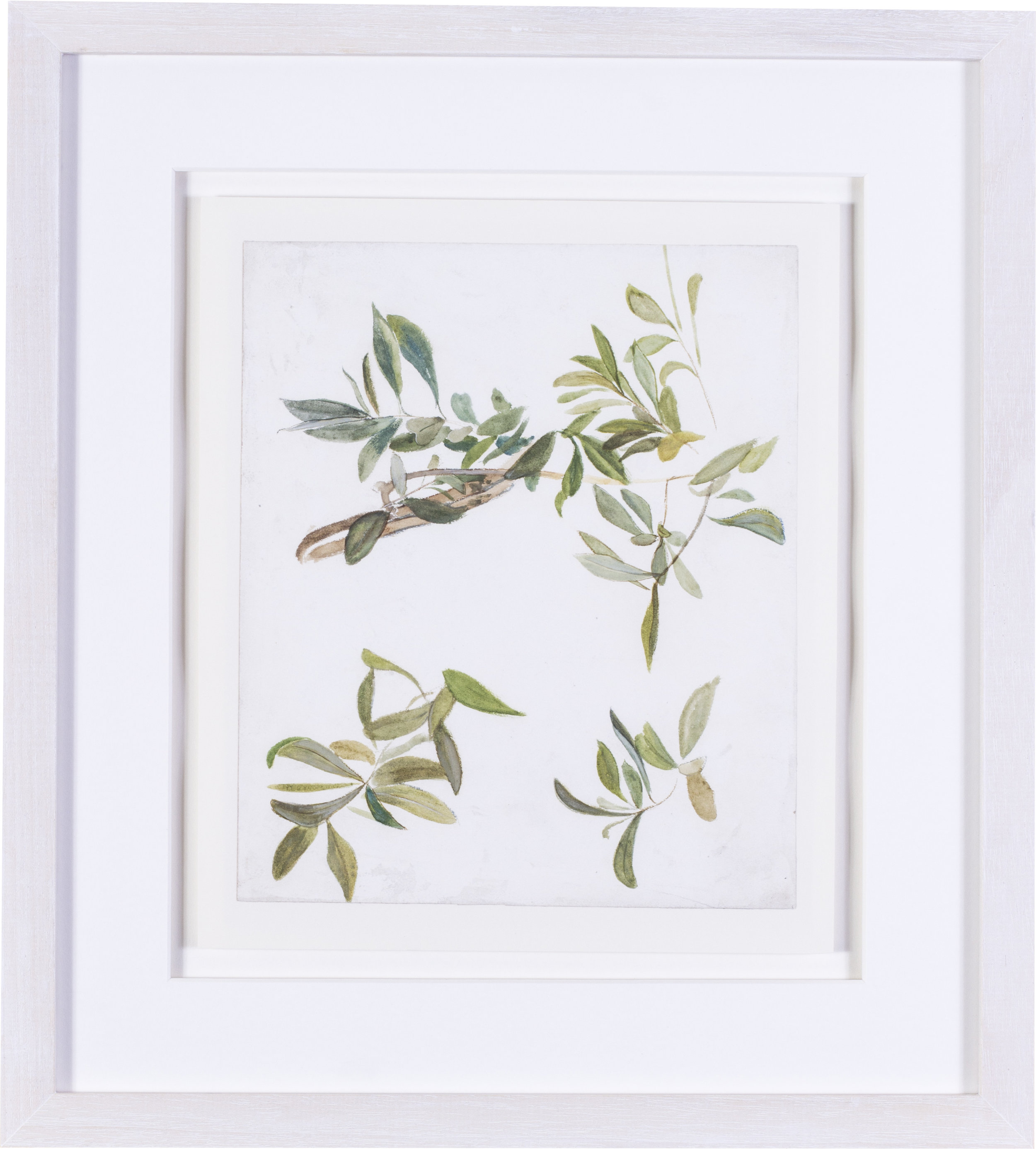 Olive branches    watercolour on paper  10 x 8.1/2 in. (25.3 x 21.7 cm.)  Provenance: The Clayton-Stamm Collection.  Dominic Winter, Cirencester, 8thNovember 2018, lot 464  £1,900