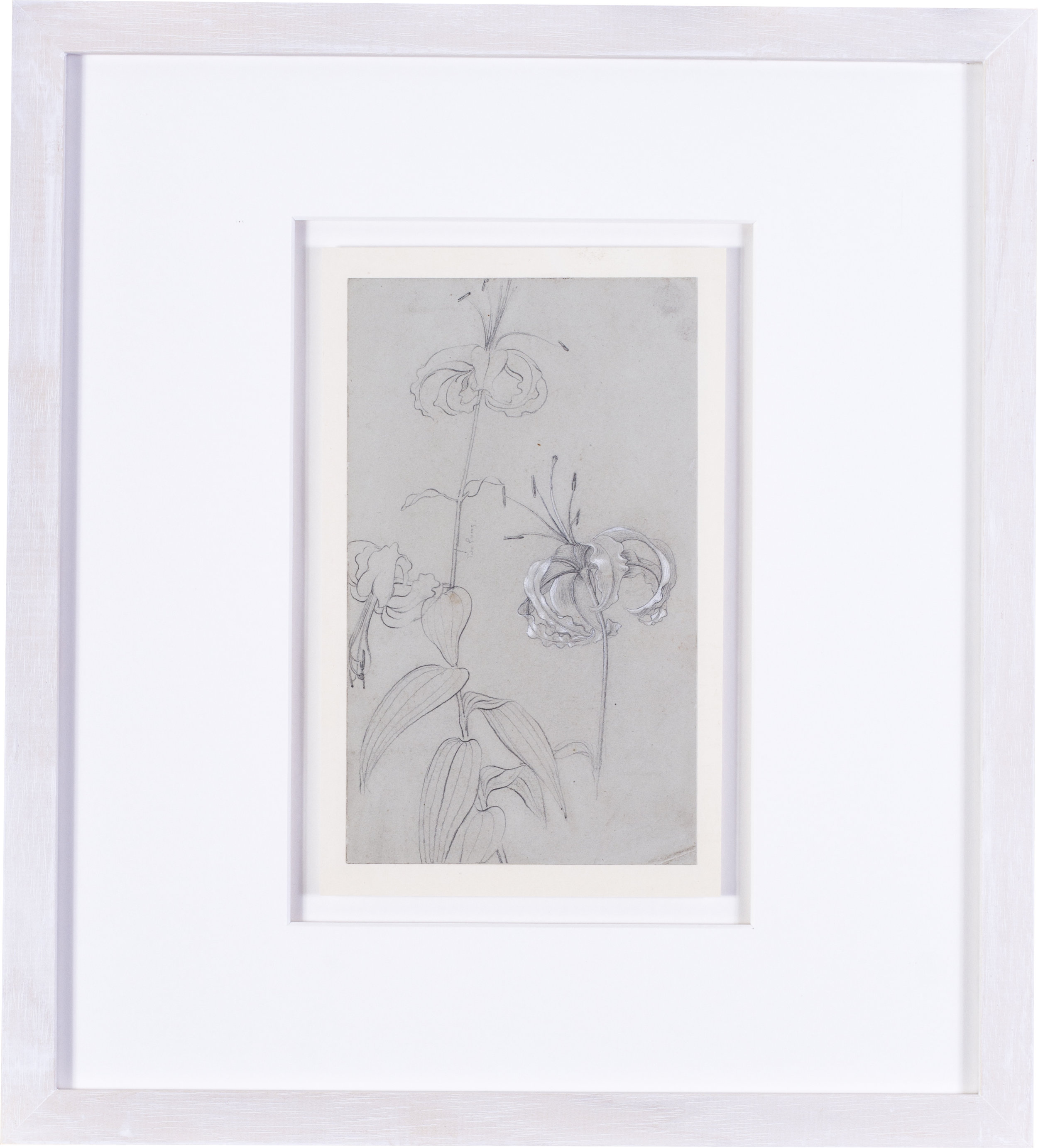 Lilies    pencil on grey paper heightened with white  inscribed 'too long' (beside a stalk)  9 x 5.3/8 in. (23 x 13.5 cm.)  Provenance: The Clayton-Stamm Collection.  Dominic Winter, Cirencester, 8thNovember 2018, lot 464  £2,000