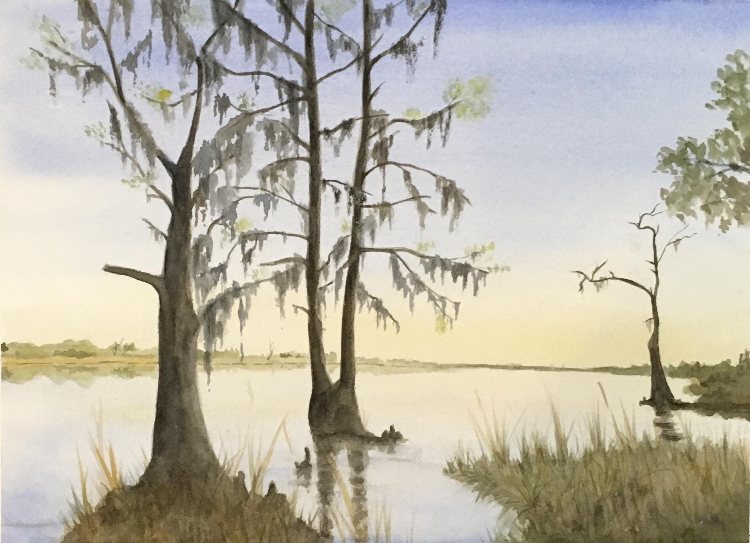 Sunrise Cypress