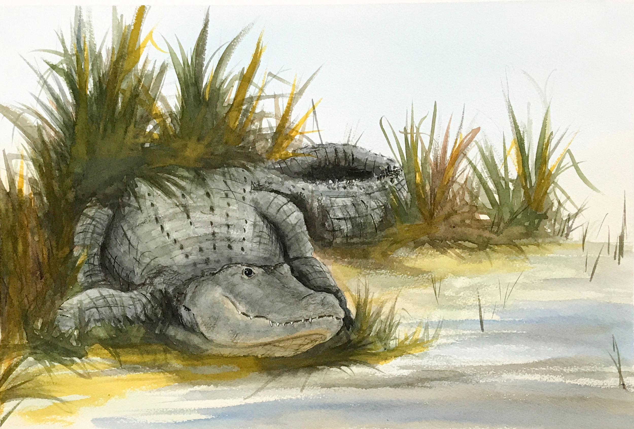 Holland_gator_watercolor.jpg