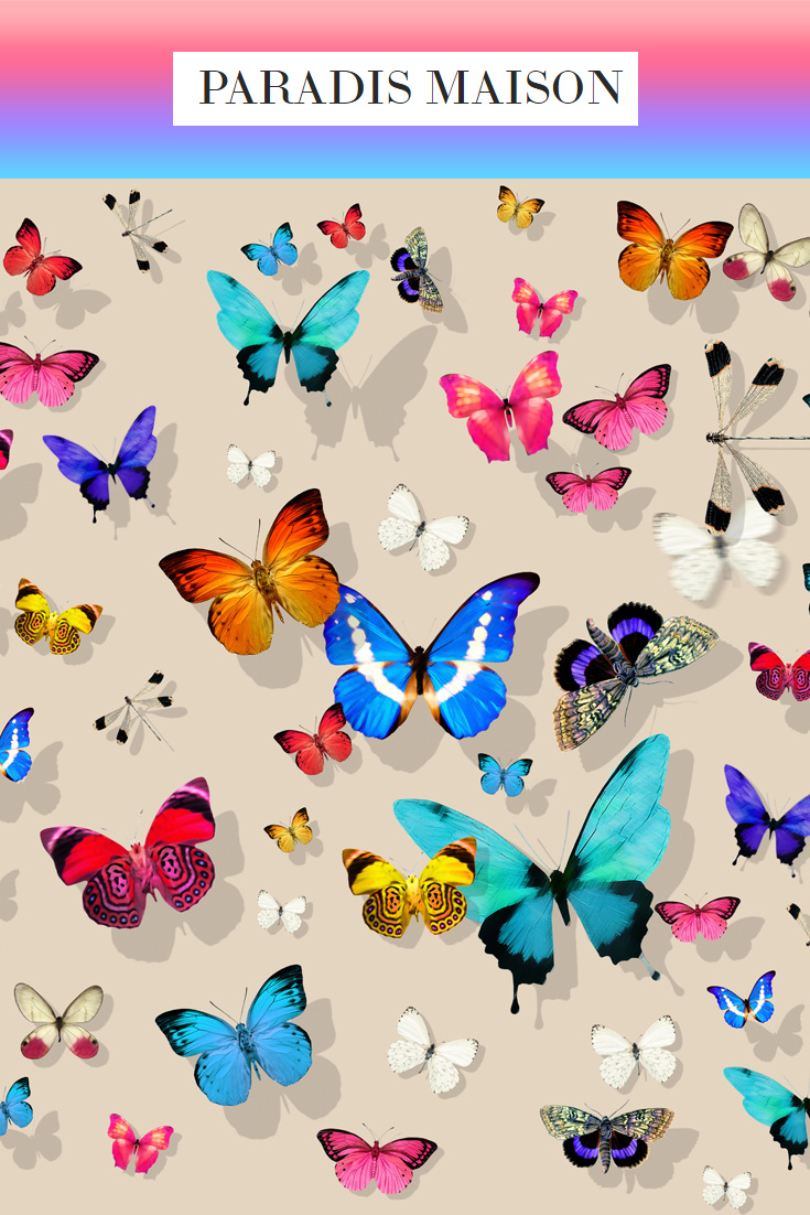 butterfly_hazelnut.jpg
