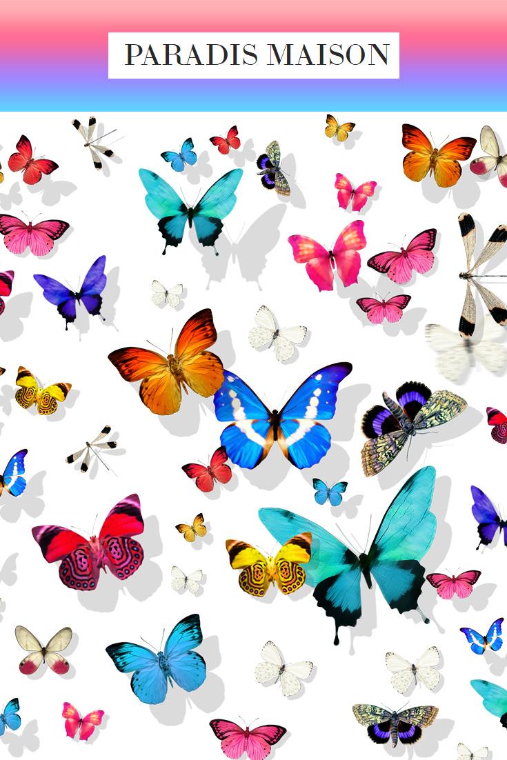 butterfly_white.jpg