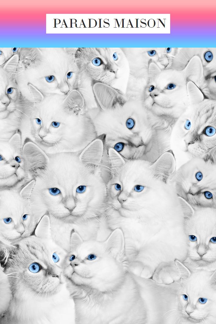 kitten_fabric2.jpg