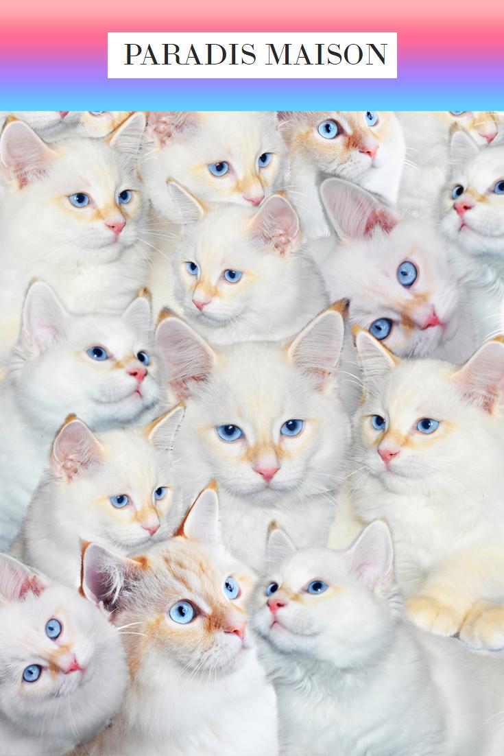 kitten_fabric.jpg