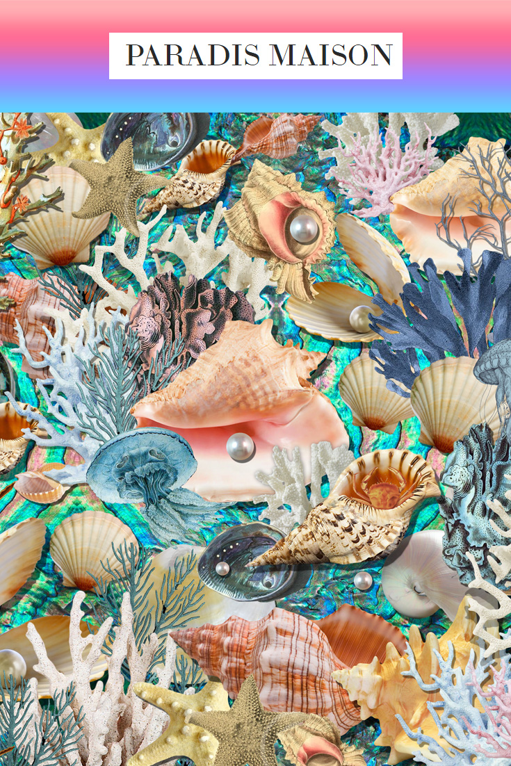 seashells_1.jpg