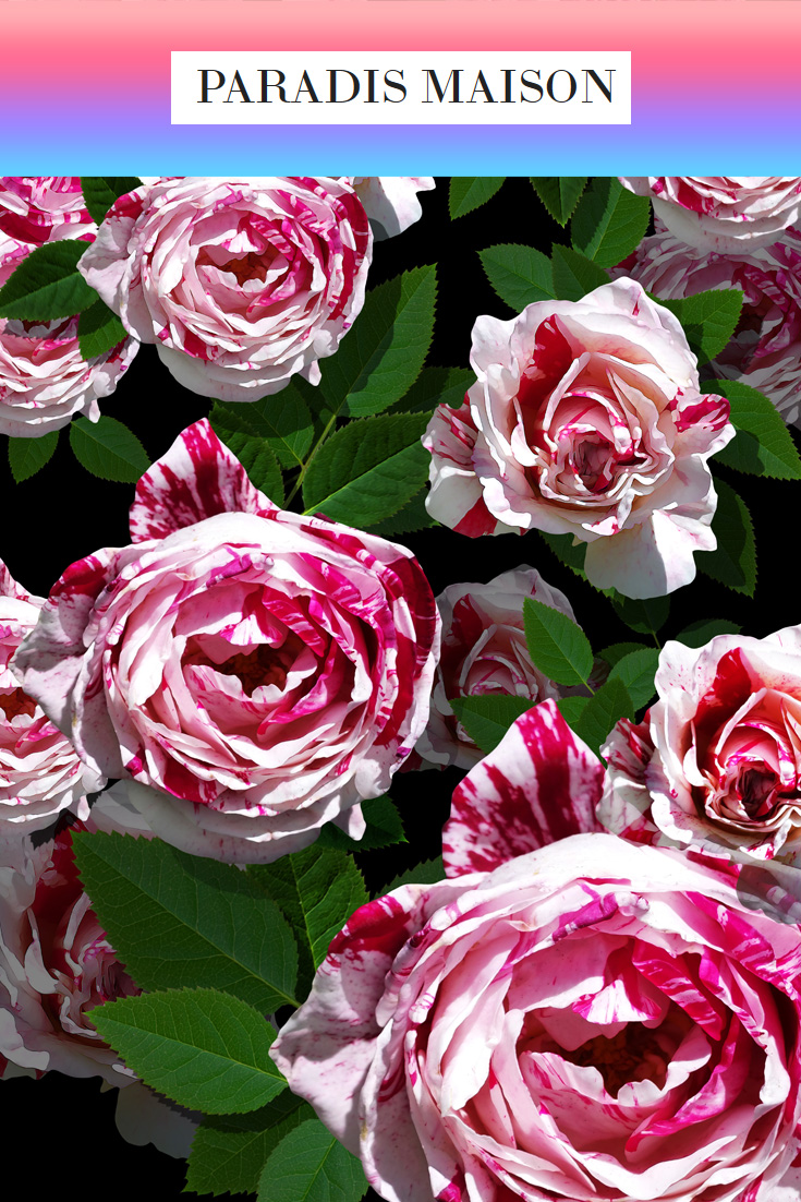 spotty_rose.jpg