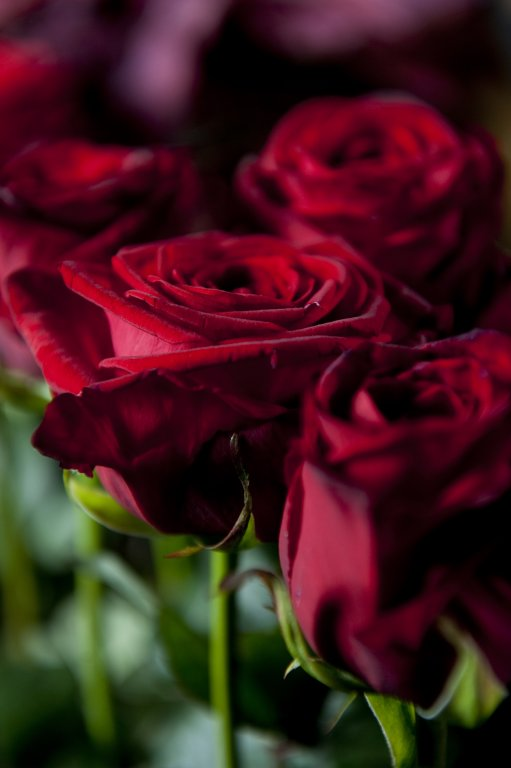 Campagne-Shop-for-a-Week-a-rose-is-a-rose-is-a-rose-picture-by-Jeannine-Govaers-9-copy-511x768.jpg