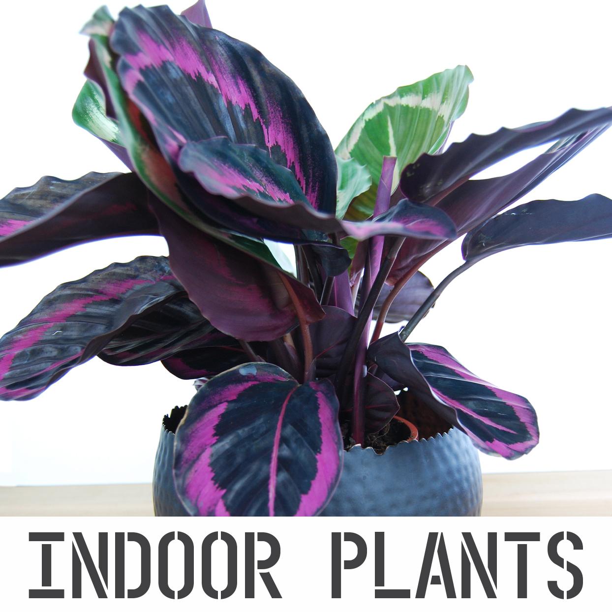 INDOOR PLANTS (R).jpg