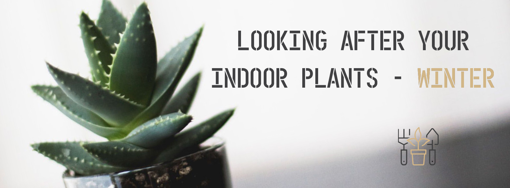 Indoor Plant Care Banner (PS1).jpg