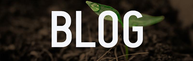 Blog Banner RAW (1).jpg