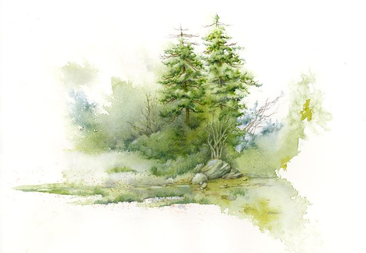 pines_study2.jpg