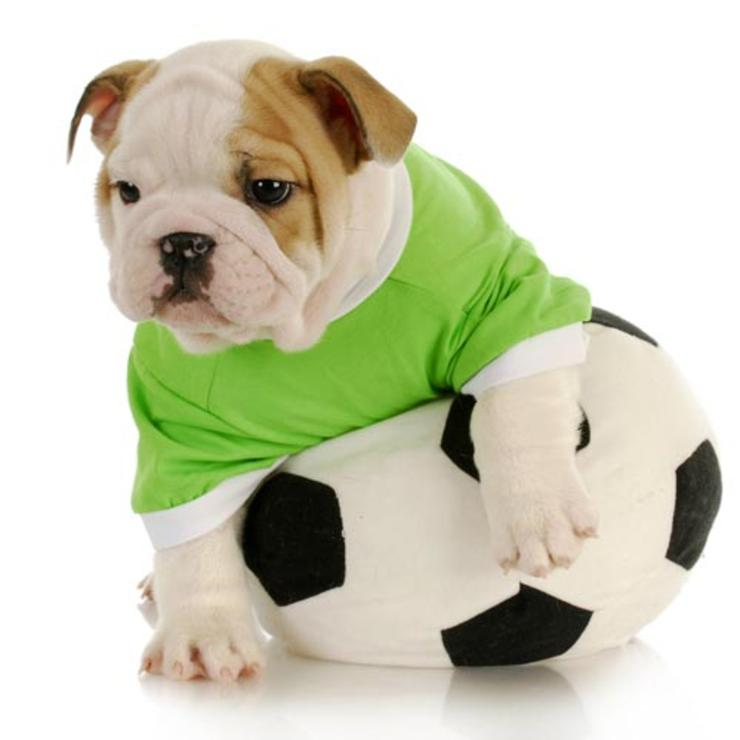 puppies-world-cup-01.jpg