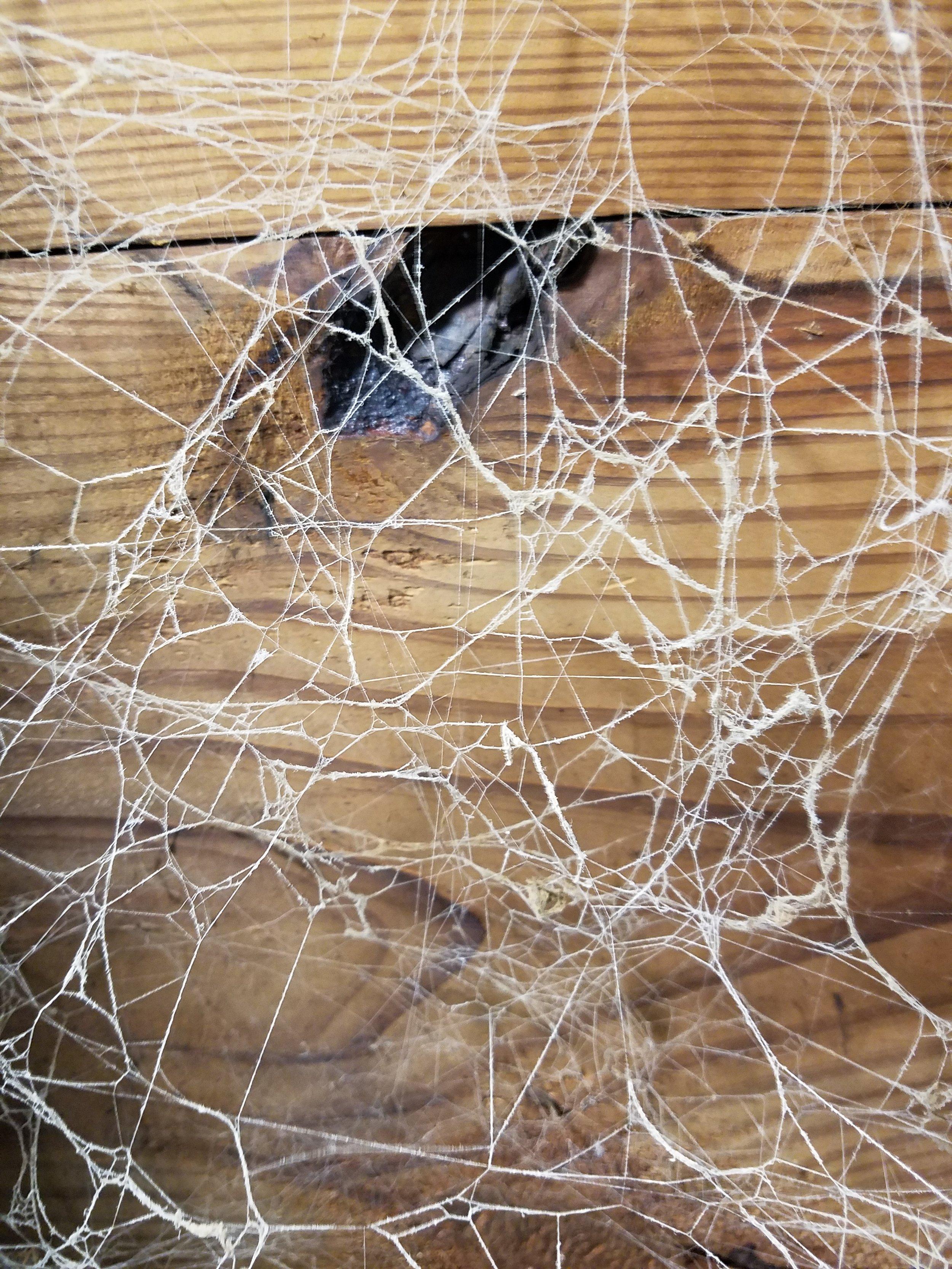 demo cobweb.jpg