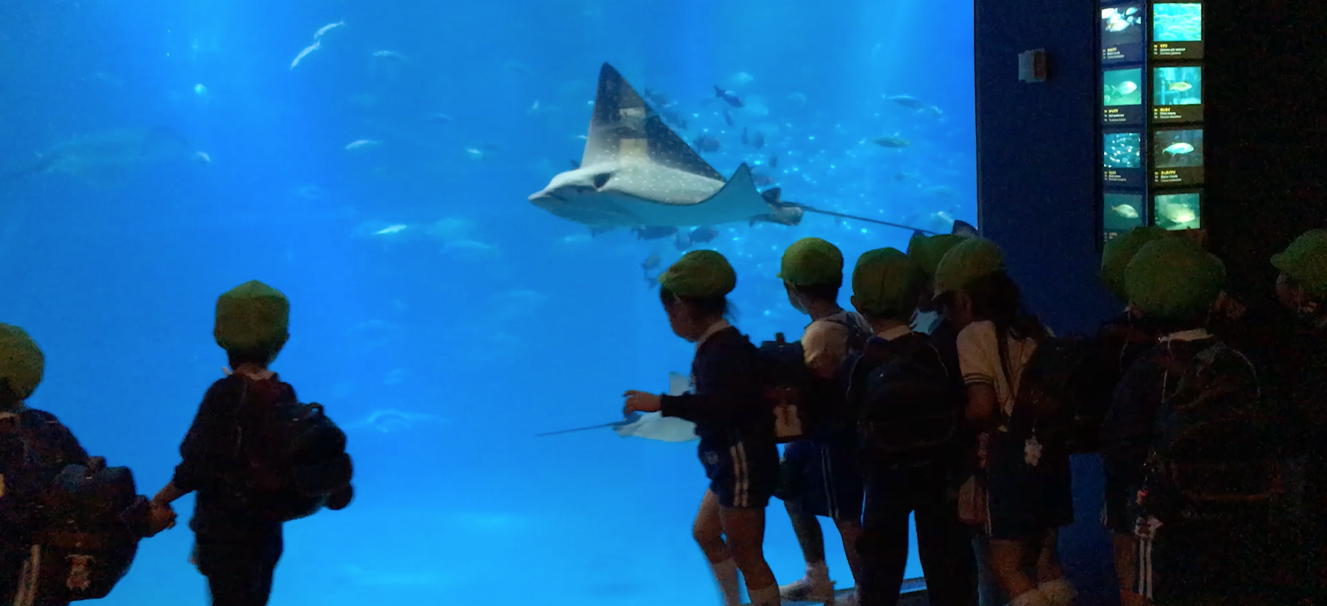 """""""Green Group"""" of school kids screaming with delight at the manta ray!"""