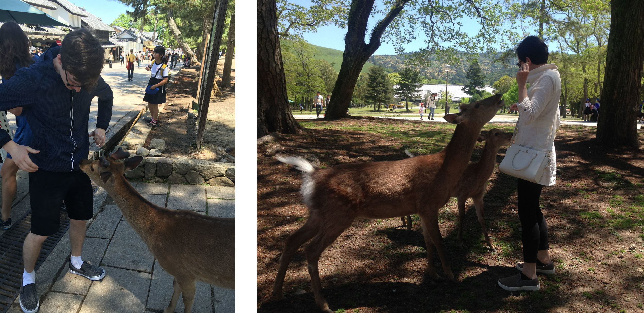 """Michael and I getting """"greeted"""" by deer once they learned we had crackers. We quickly ran out and needed more."""