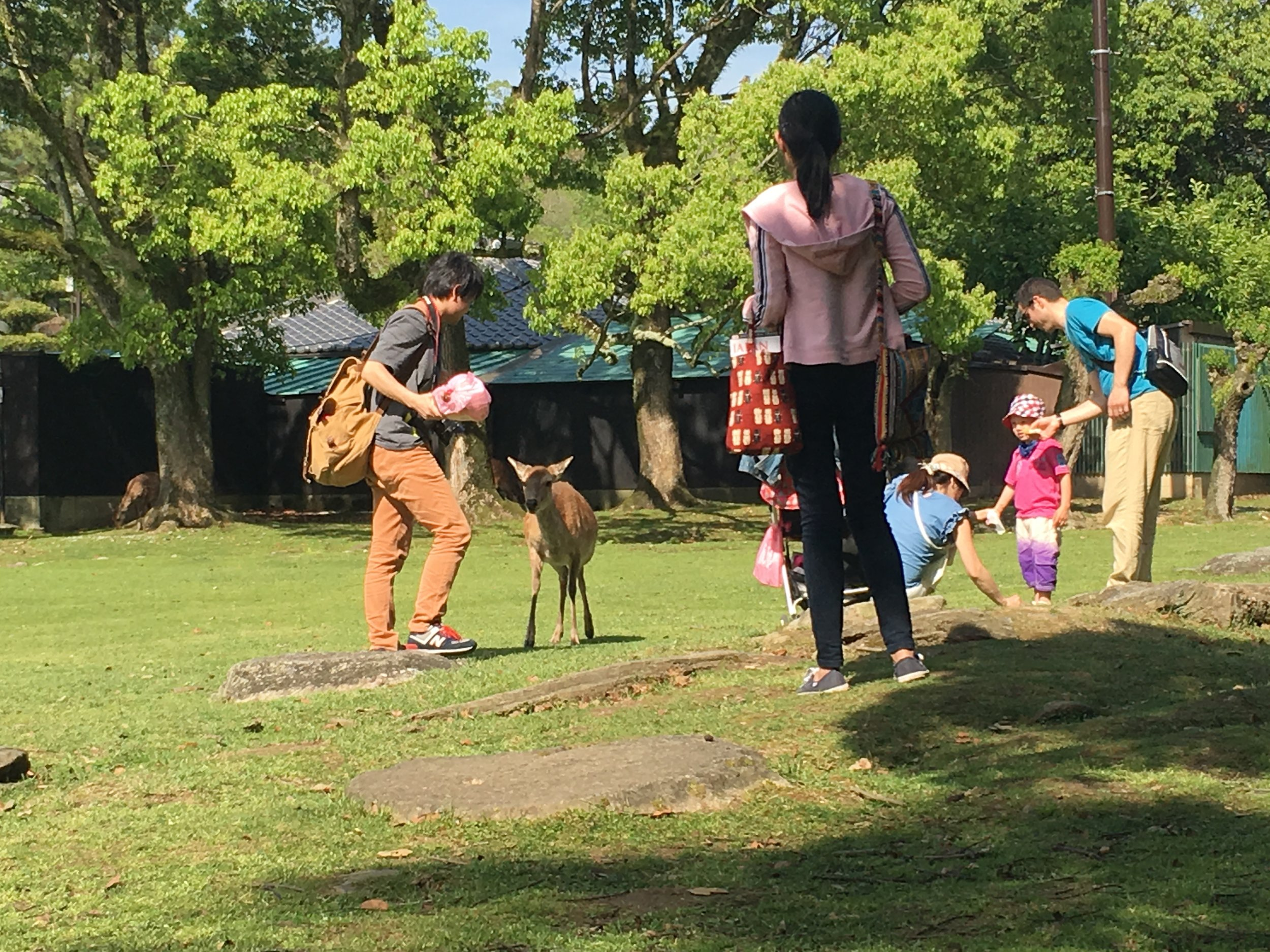 The Hip Japanese Family post dad and stroller VS deer.