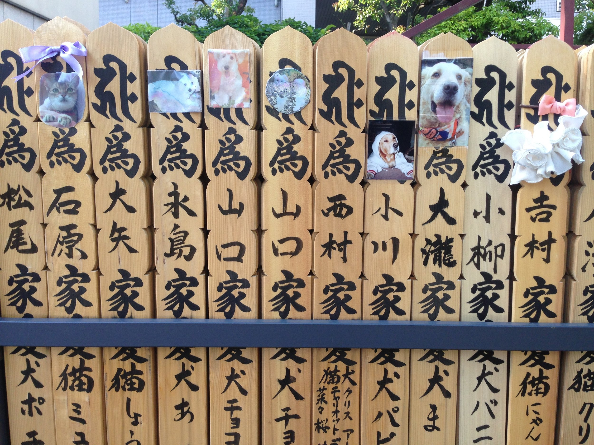 Many photos of dogs and a few cats on rows and rows of these wooden panels.