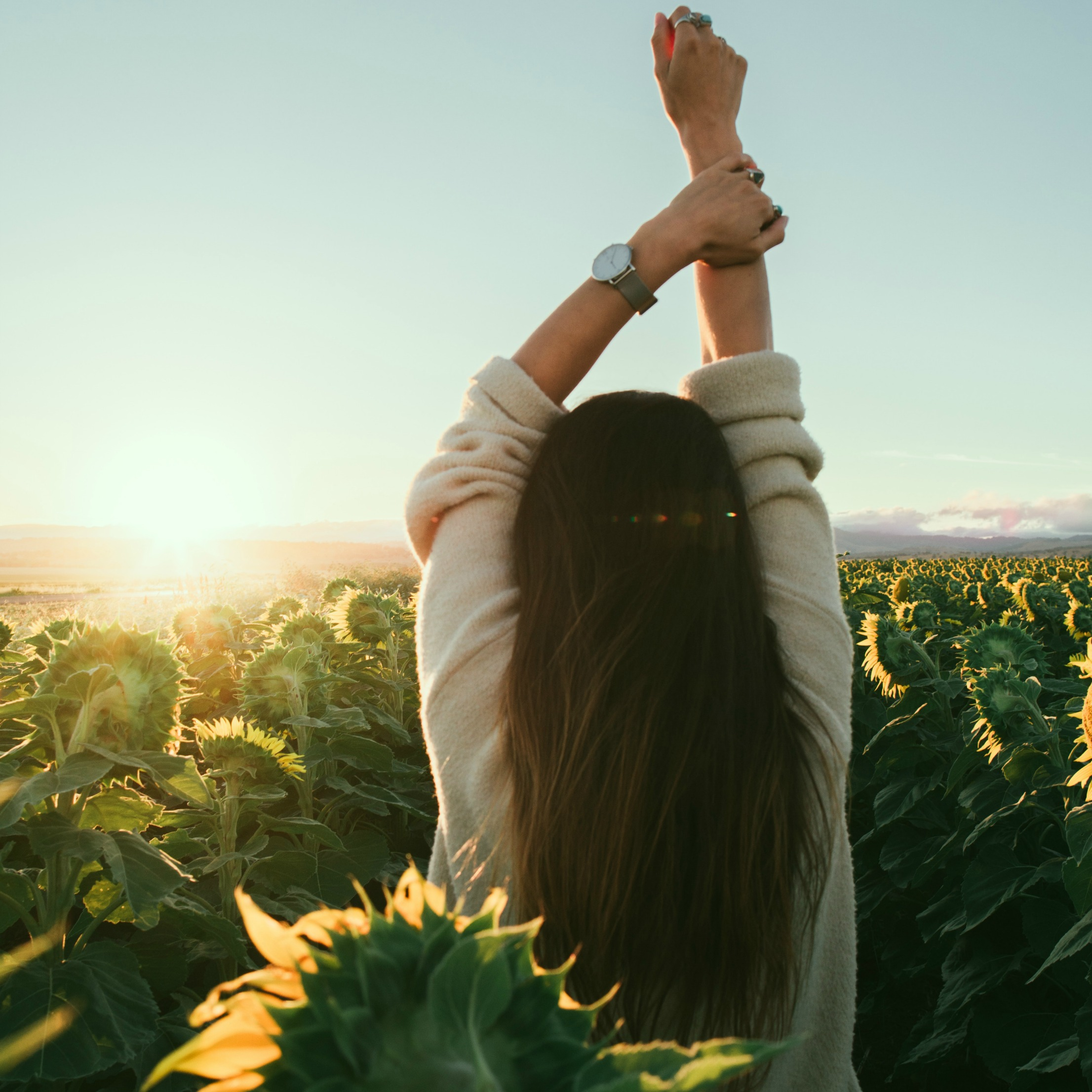 sunflowers_Crop.jpg