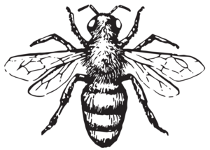 Bee_Hunter_Wine_logo.png