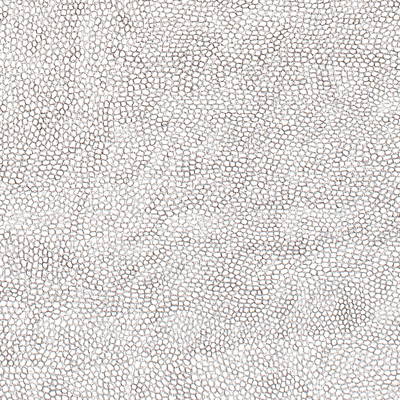 (Detail) Circle Within Large Triangle,2007 50 by 38 inches Graphite on paper